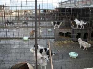Activitatea de gestionare a adăposturilor de câini ar urma să fie scoasă la licitaţie în a doua parte a anului