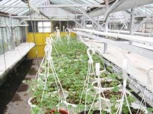 Plante care vor fi agăţate pe stâlpii de iluminat
