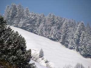 Troiene uriașe și pericol de avalanșe în munții din județ