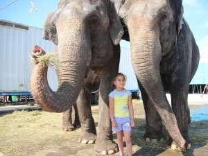 Vanessa (5 ani) e cea mai bună prietenă a elefanţilor de la Circul Gärtner