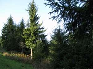 Printr-o inginerie, un individ a încercat să pună mâna pe o suprafaţă de 2.300 ha de pădure în Broşteni