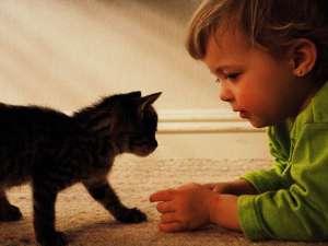Pisicile prezintă doar câteva efecte benefice asupra stării de sănătate a copiilor