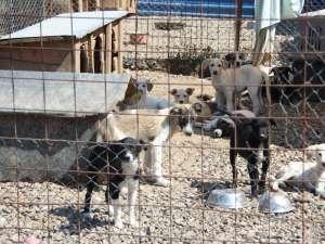 În adăpostul primăriei se află acum 1.100 de câini adunaţi de pe străzi