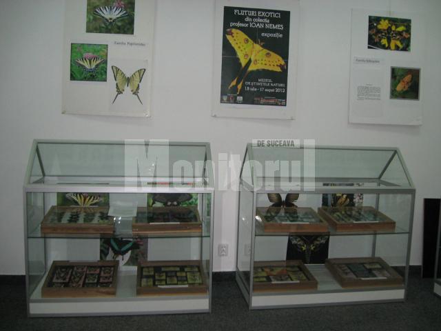 Expoziţie de fluturi exotici