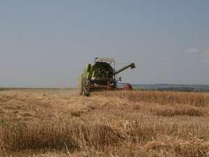 Campania de recoltare a grâului este aproape la final