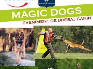 Demonstraţii de dresaj canin, în parcarea Shopping City Suceava