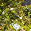 Portocale coapte la baza munţilor Himalaya