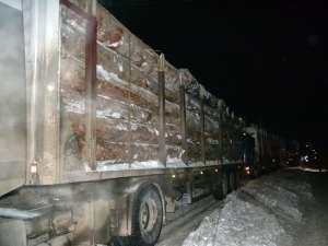 Poliţiştii au verificat în trafic 388 de maşini care transportau lemn