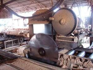 Afaceristul a exploatat mari cantităţi de material lemnos la negru