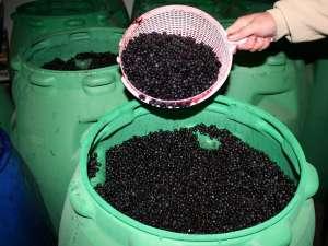 Din vânzarea fructelor de pădure în 2012 au fost obţinute venituri de peste 470.000 de euro