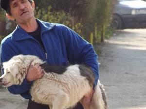 Câini tranchilizaţi şi prinşi în cartierul Obcini