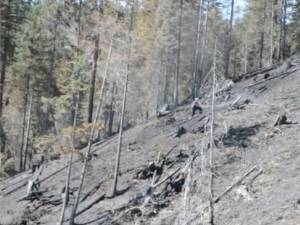 Incendiul care a distrus 50 de hectare de pădure