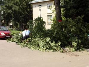 """O parte din teiul din faţa Muzeului de Artă """"Ion Irimescu"""" s-a prăbuşit în stradă"""