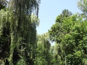 Parcul Dendrologic Şipote, pădurea din mijlocul oraşului