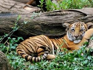 ziua internaţională a grădinilor zoologice
