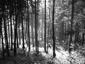 """""""Pădurea Laura"""""""