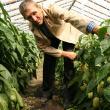 Unul din secretele legumelor uriaşe este sămânţa de calitate folosită