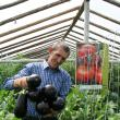 Sera lui Vasile Mătrăşoaie poate fi luată ca exemplu de cei care doresc să practice legumicultura