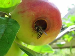Protecția Civilă, trimisă să dea cu flit după viespi