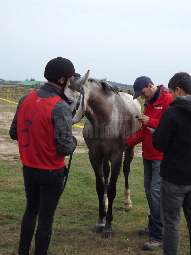 Maratonul cailor de rasă, la Horodnic de Sus