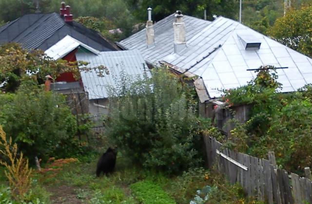 Ursul fotografiat de un localnic