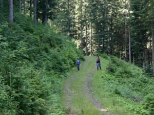 Un copil în vârstă de 6 ani, din Fundu Moldovei, a dispărut de miercuri seară în pădure