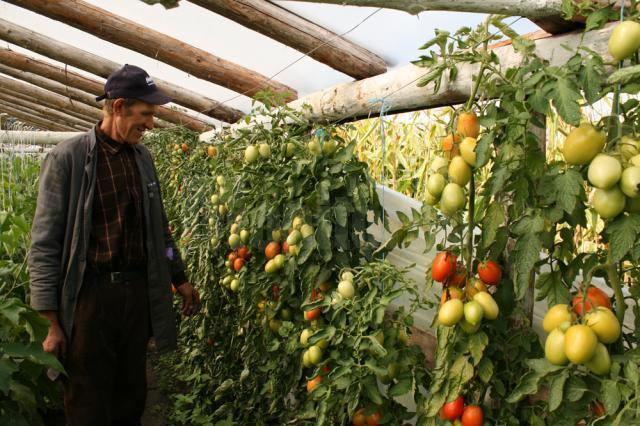 Vasile Mătrăşoaie, un legumicultor căruia îi place să muncească