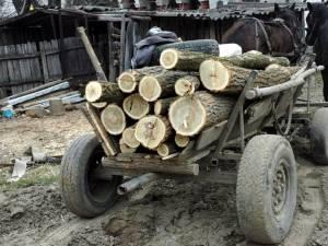 """""""Transportul lemnelor de foc"""""""