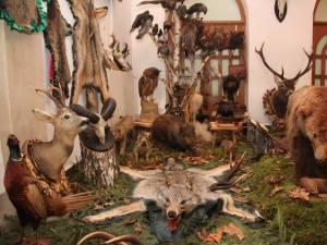 Muzeu cinegetic amenajat pe holurile Direcţiei Silvice Suceava