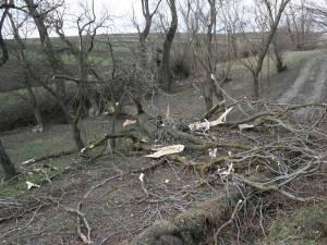 Copacul a căzut pana pe drumul din faţa casei familiei Blahovici, unde se aflau cele două victime