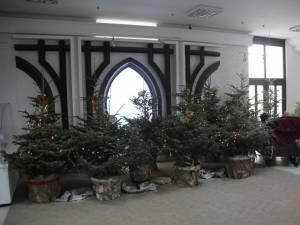 Consiliul Judeţean este decorat anul acesta cu brazi eco