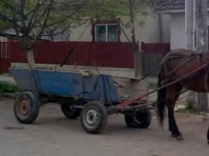 Caii care au provocat accidentele erau nesupravegheaţi