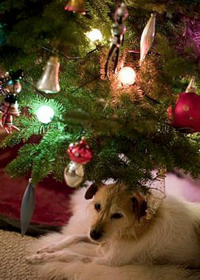 Măsuri pentru siguranţa câinelui dumneavoastră în perioada sărbătorilor