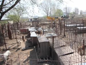 Săptămâna viitoare, la adăpostul de câini din lunca Sucevei se va desfăşura o campanie gratuită de sterilizare a câinilor şi pisicilor