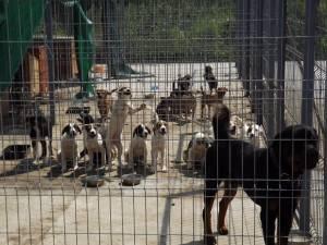 Câini din adăpostul din lunca Sucevei