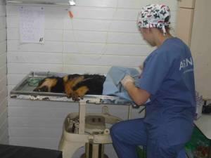 Operaţii de sterilizare gratuită, efectuate de medicii organizaţiei Romania Animal Rescue