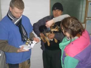 În numai patru zile au fost sterilizaţi aproape 250 de câini şi 70 de pisici