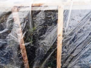 Două familii din Stroieşti reclamă că ferestrele, rufele puse la uscat, folia de pe straturile cu răsad şi maşinile sunt stropite cu fecale