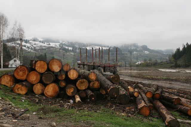 Firmele mici de pe Valea Bistriţei care exploatează şi prelucrează lemn au şanse minime să supravieţuiască pe piaţa de profil