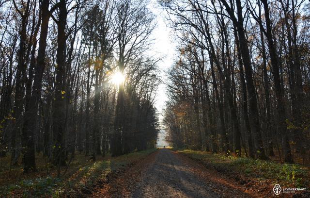 Pădurea (Quercetumul) Crujana