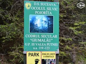 Codrul secular Giumalău