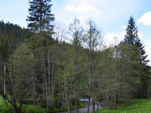 Traseu bicicletă: Păstrăvăria Valea Putnei – Codrul secular Giumalău