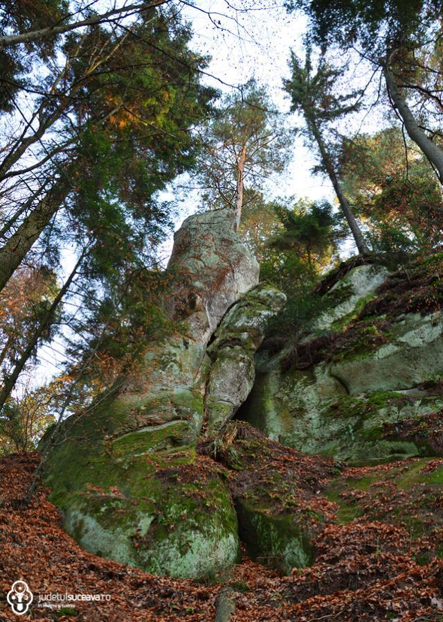 Rezervaţia paleontologică Piatra Pinului și Piatra Șoimului