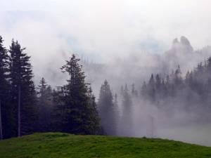 Rezervaţia botanică Fâneţele montane Todirescu