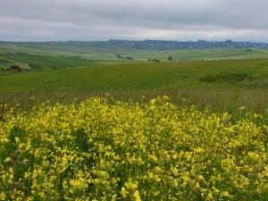 Rezervaţia botanică Fâneţele seculare de la Calafindeşti
