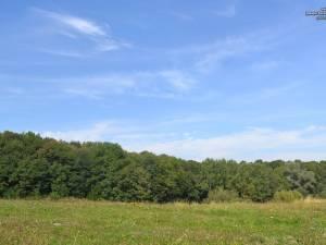 Rezervaţia forestieră Pădurea Zamostea – Luncă