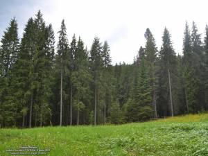 Pădurea Roșoșa