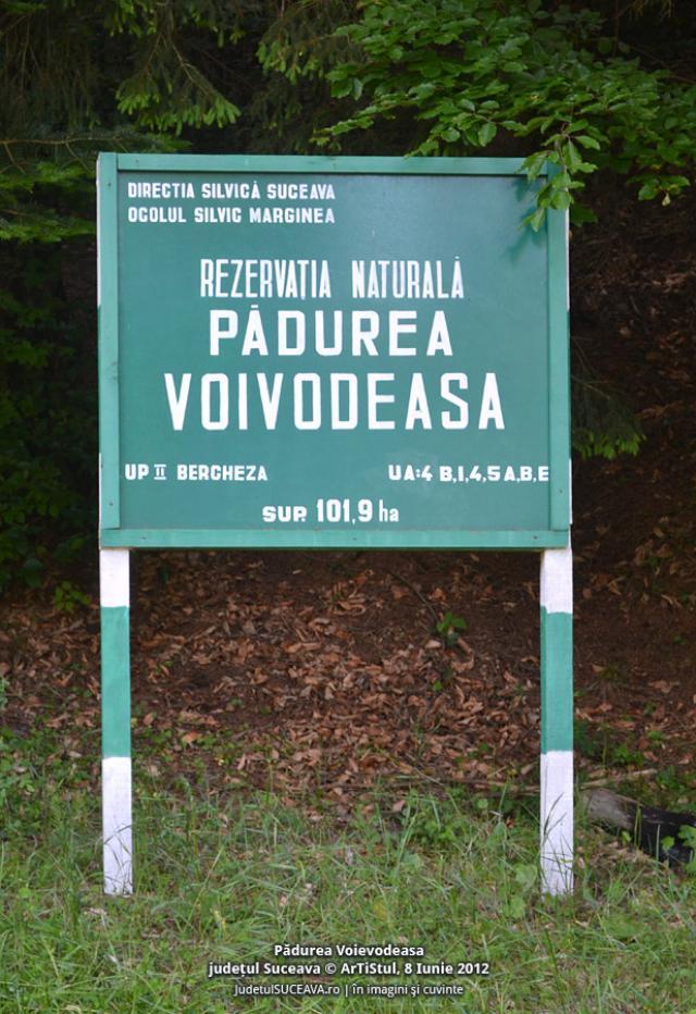 Pădurea Voievodeasa