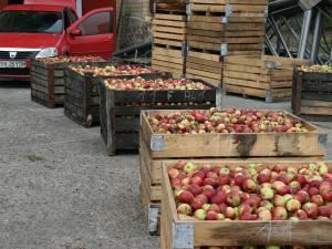 Tone de mere industriale pe stoc la familia Florea