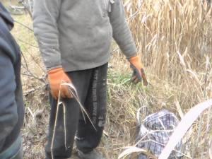 Bunurile au fost găsite într-o zonă cu vegetație uscată, unde au fost ascunse de autori